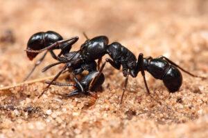 شركة مكافحة النمل الابيض في ابوظبي