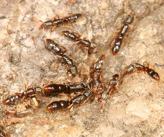 شركه مكافحة النمل في راس الخيمة