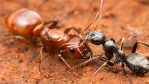 شركه مكافحة النمل في عجمان