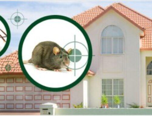 شركة مكافحة حشرات في دبي |0568199078 |رش الحشرات