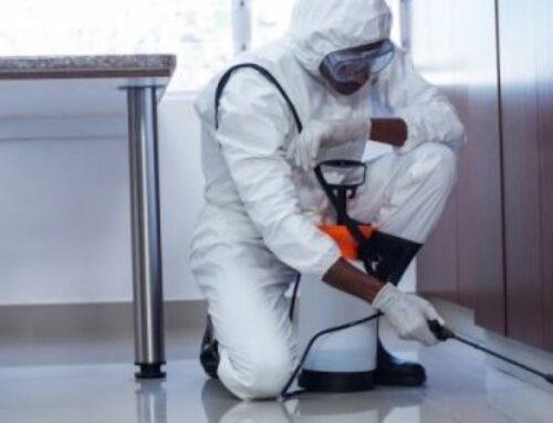 شركة مكافحة حشرات في راس الخيمة |0568199078 |رش الحشرات