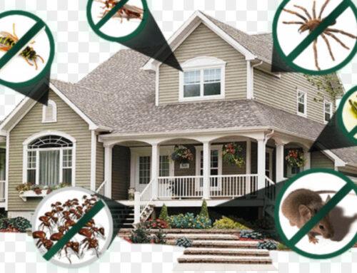شركة مكافحة حشرات في الفجيرة |0568199078 |رش الحشرات