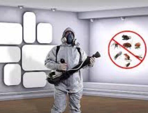 شركة مكافحة حشرات في العين |0568199078 |رش الحشرات